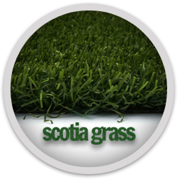 Scotia Grass